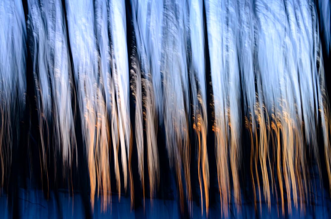 Tree Auras