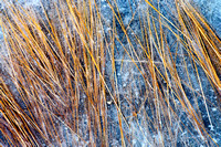 Pond Grass in Ice